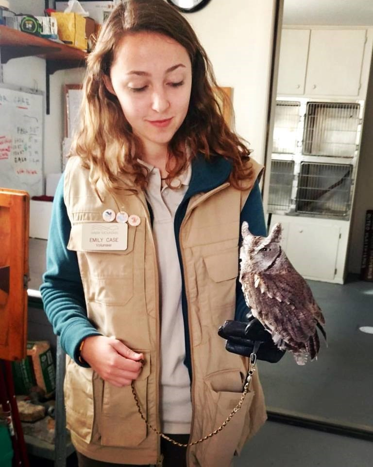 Education Trainee Emily Case practicing with the Eastern Screech Owl education bird