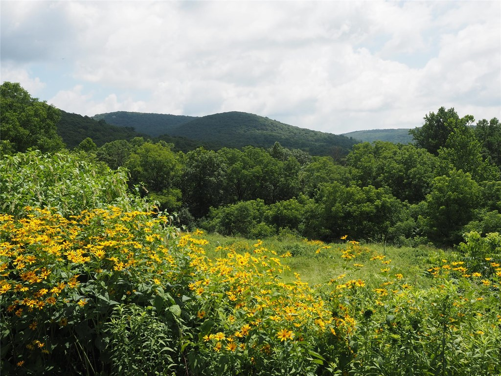 View of mountains and wildflower fields from the Acopian Center