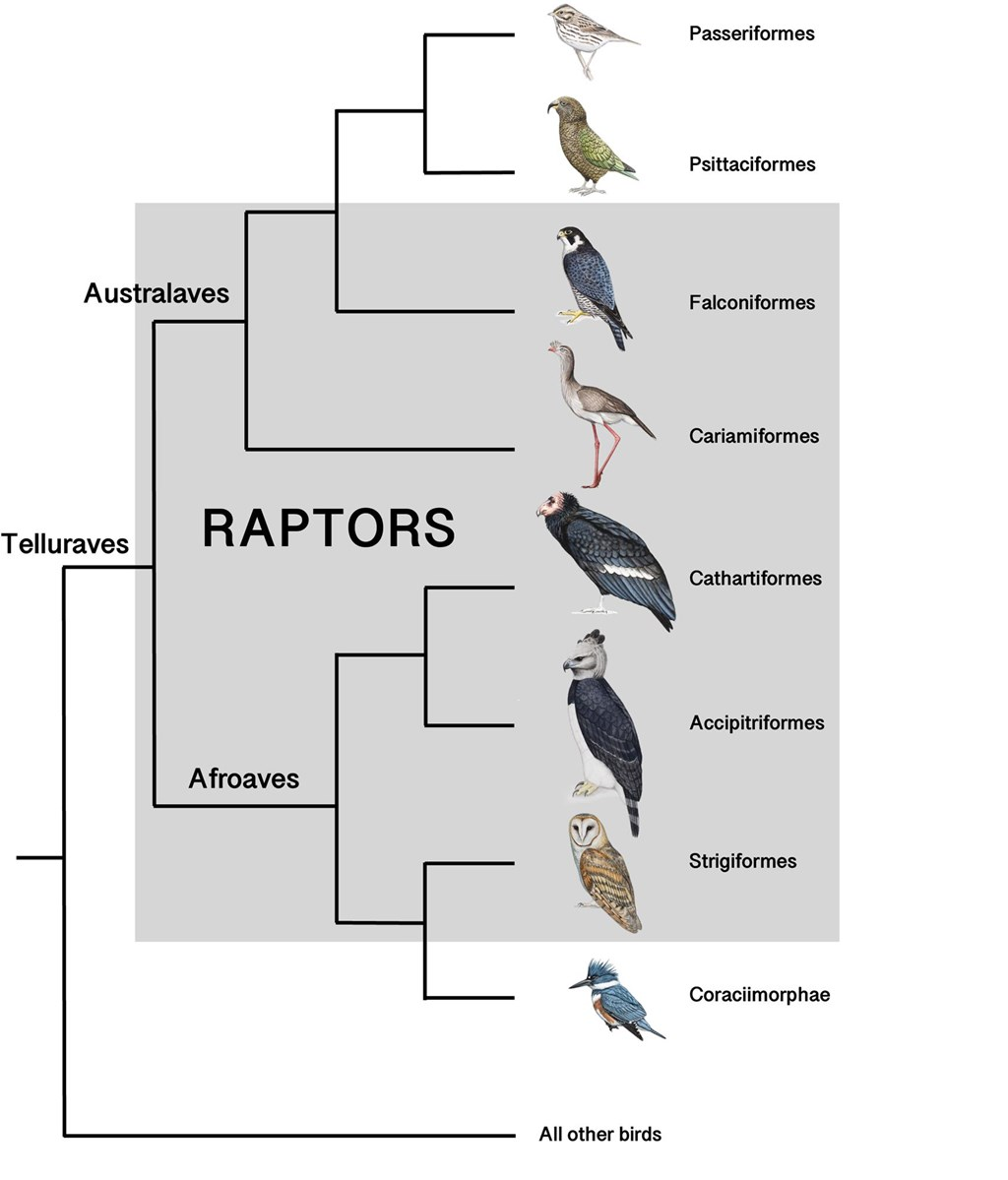 What is a Raptor? graphic