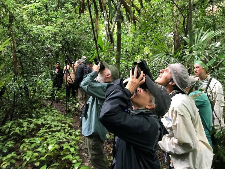 Bird Watchers Looking into Canopy