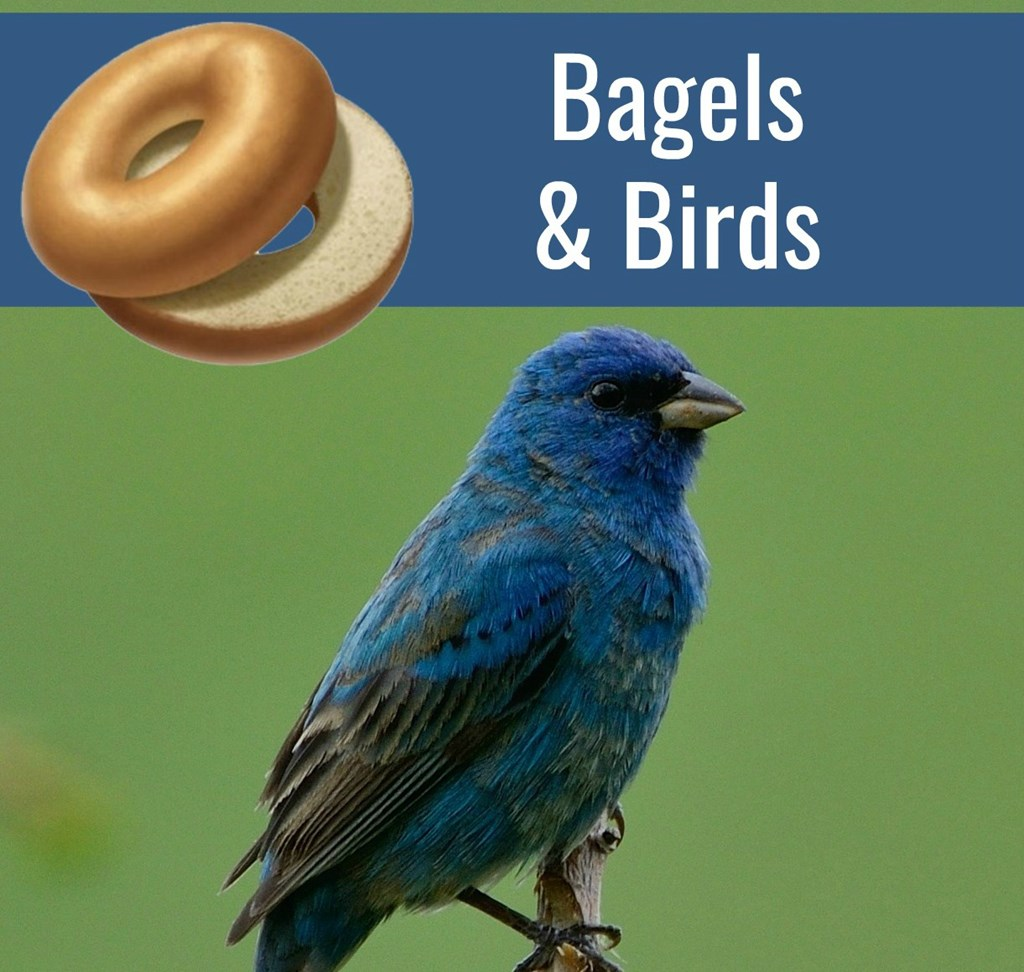 Bagels and Birds