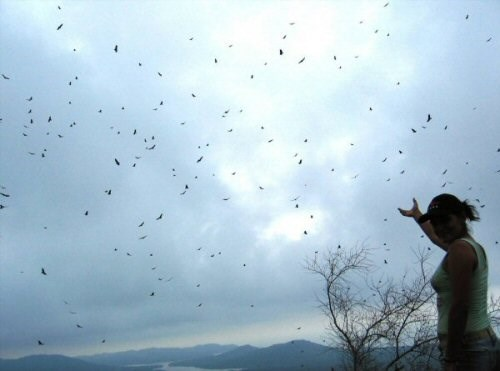 Migration over Veracruz River of Raptors