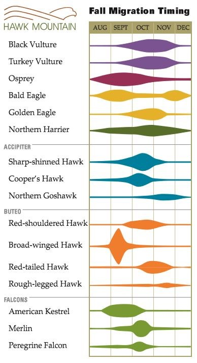 Fall Migration Timing Chart