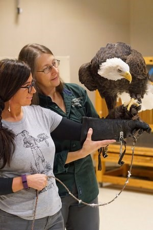 Rachel and Gail handling bald eagle