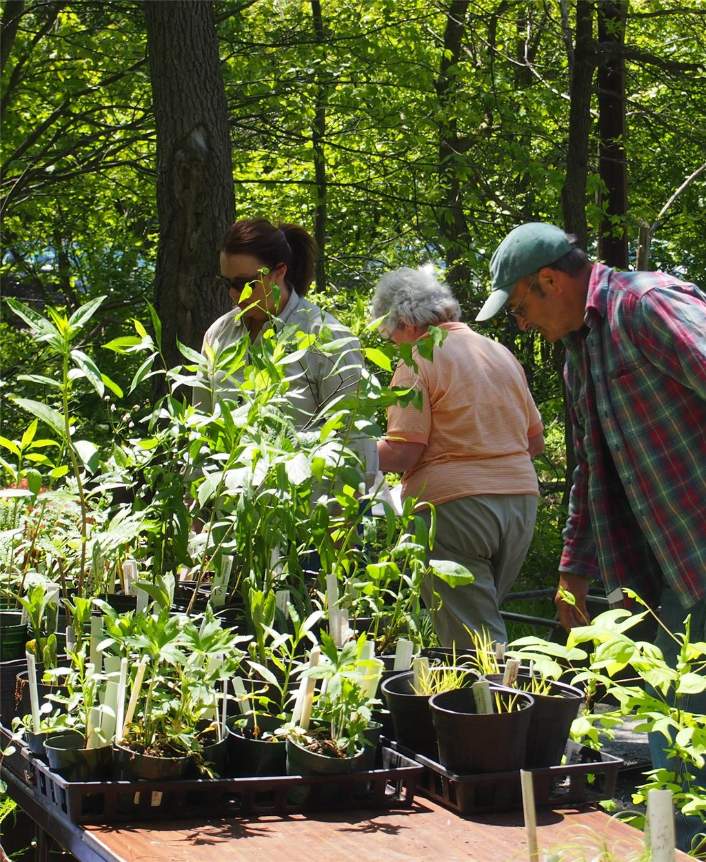Shoppers at the Native Plant Sale