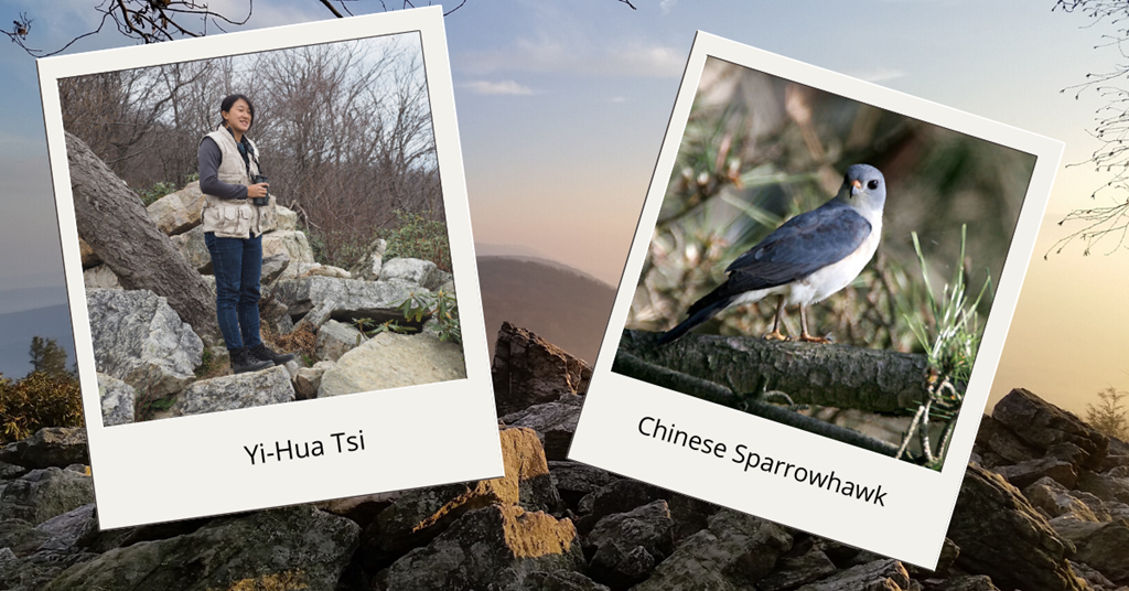 Yi-Hua and the Chinese Sparrowhawk